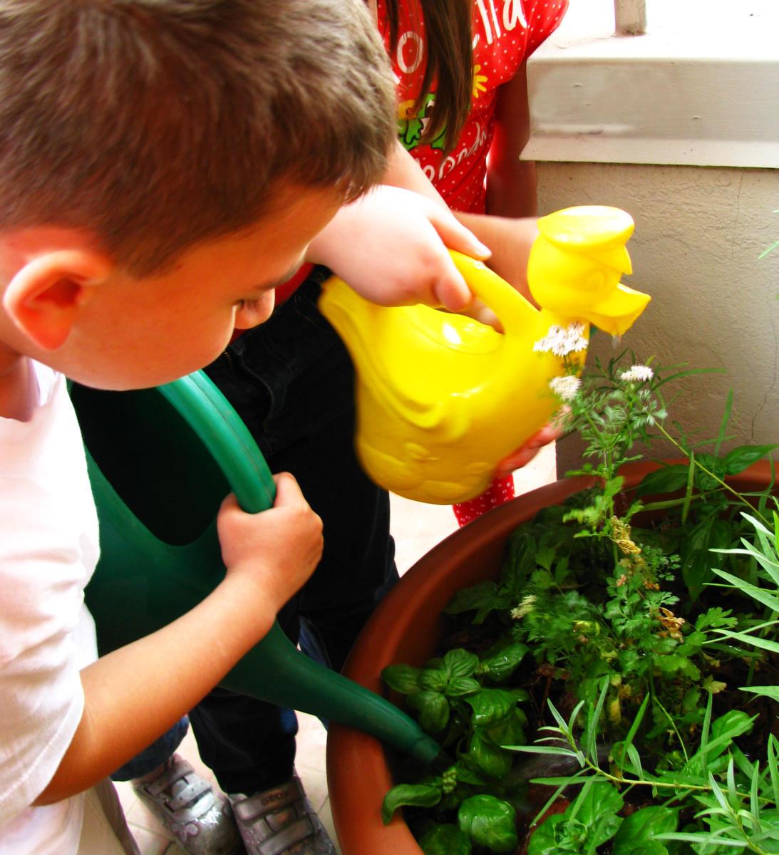 Coltivazione e cura delle erbe aromatiche