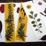 Segnalibri e altri prodotti con le erbe